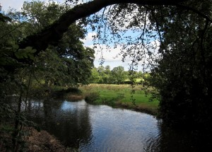 view from above of water surrounded by trees and grass