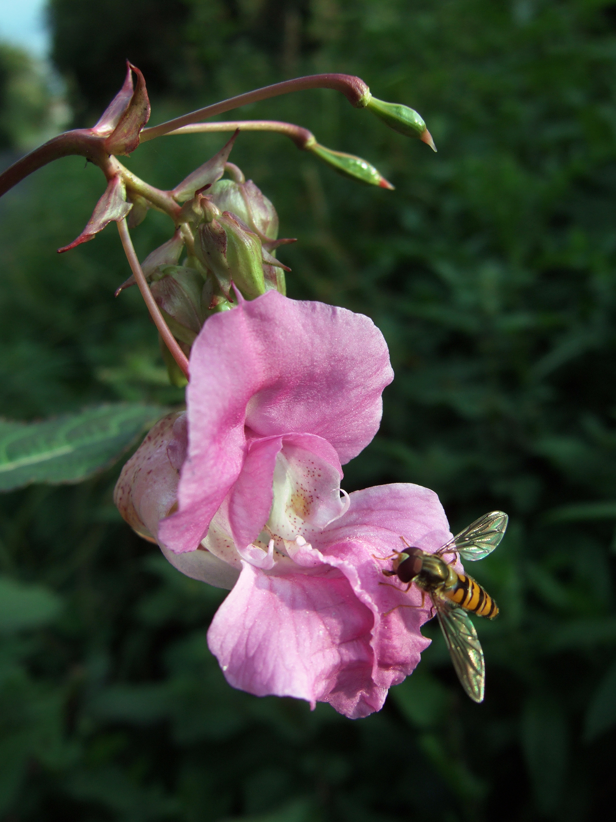 close up photo of flower with insect