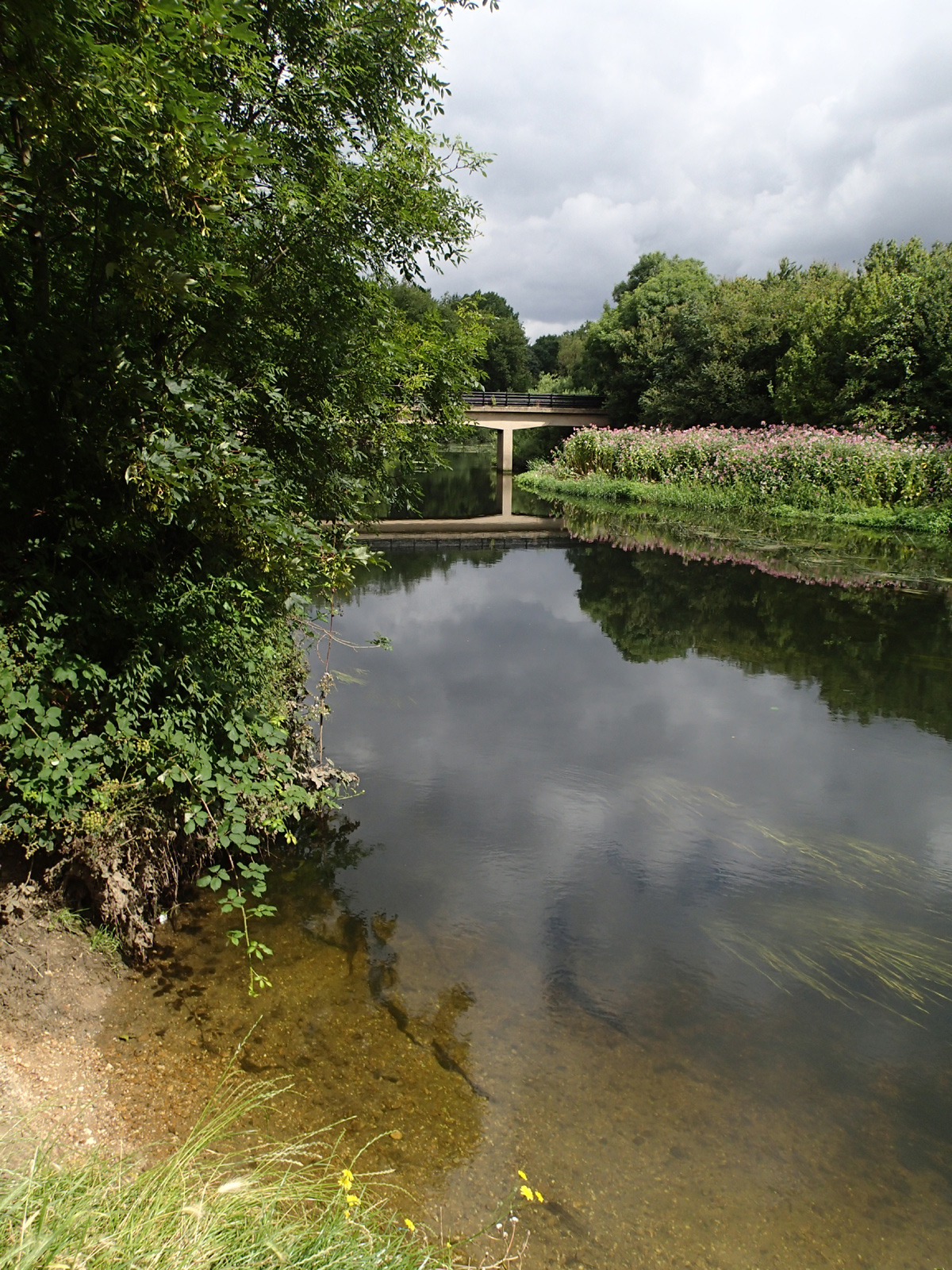 beach, clear water with weeds, Himalayan balsam on bank, trees behind