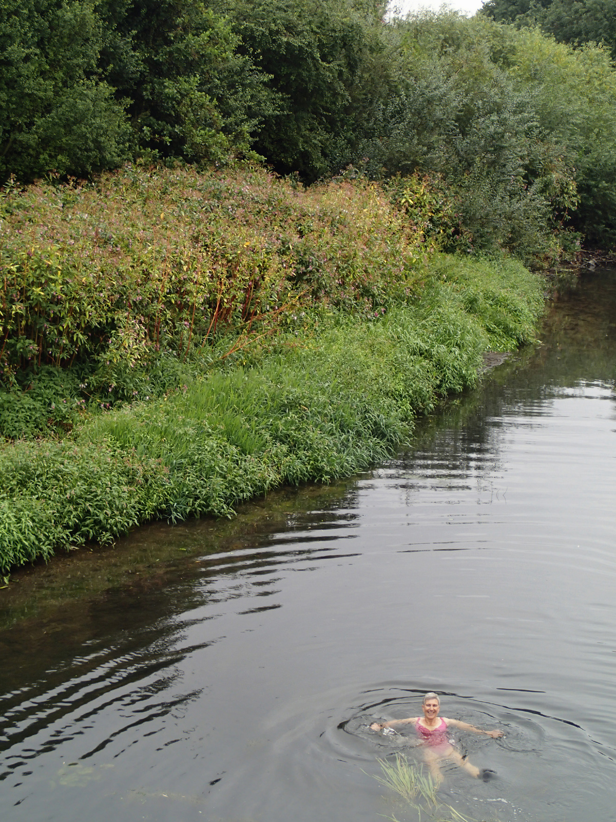smiling swimmer floating on back, in front of bank of vegetation – pink Himalayan balsam and trees behind