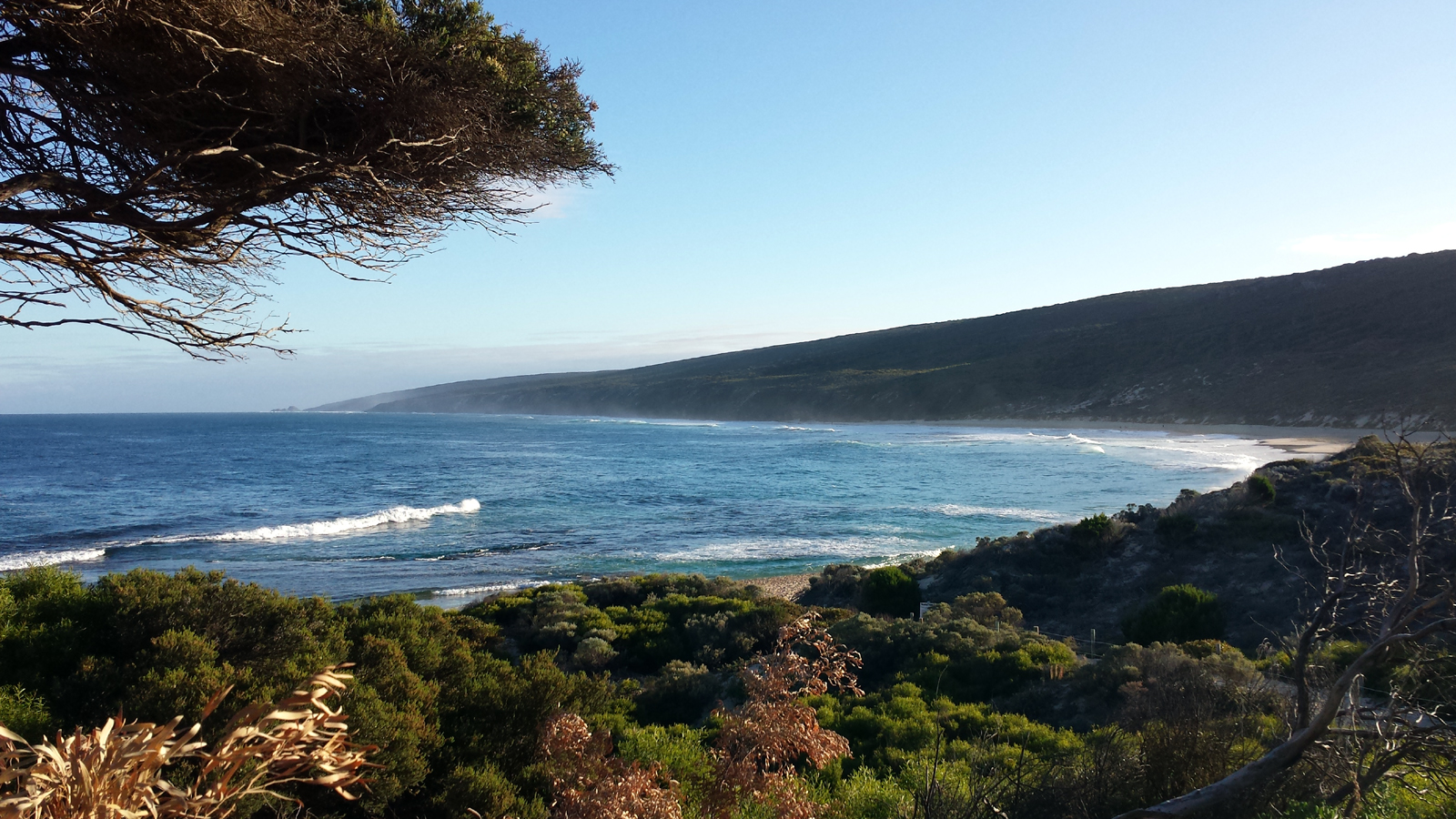 Ocean with rolling surf and a beach, seen though a weather-shaped tree and foreground foliage on a sunny day