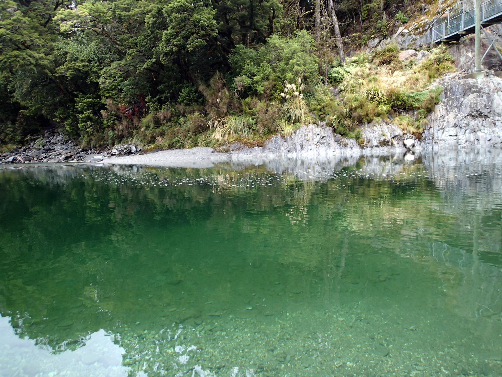 blue-green water with foliage behind and part of a suspension bridge
