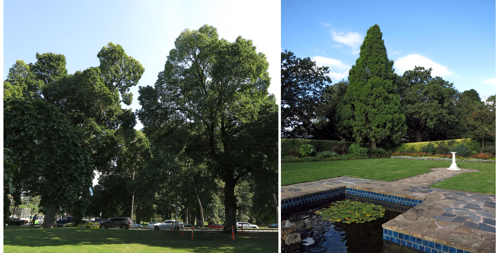 Tall trees in park with cars; Formal garden with water and trees