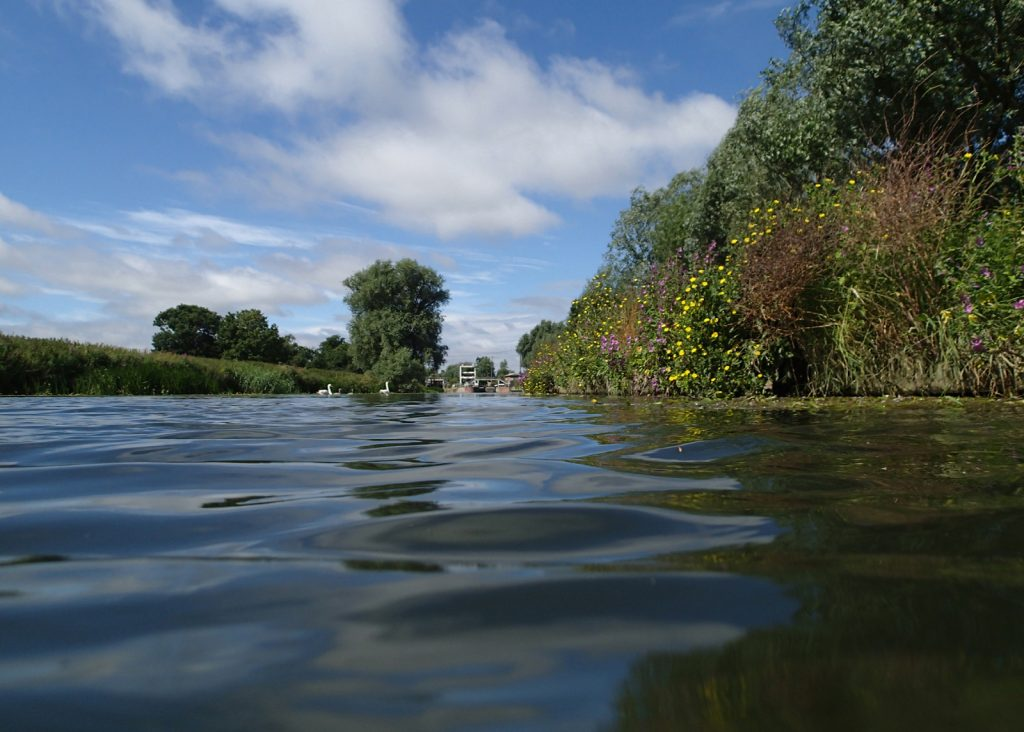 swimmers eye view of the water and banks of a river
