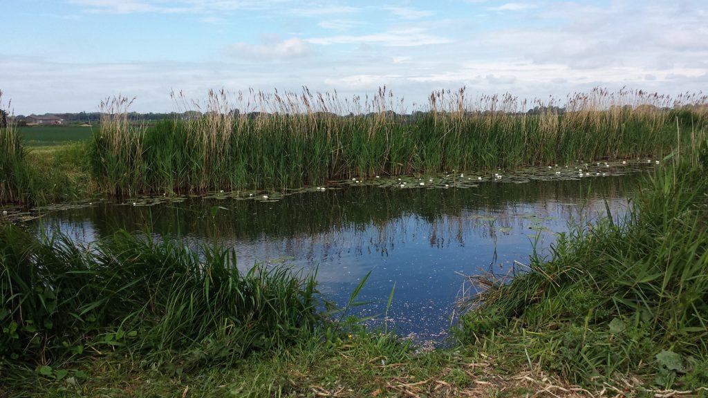 water, reeds, blue sky
