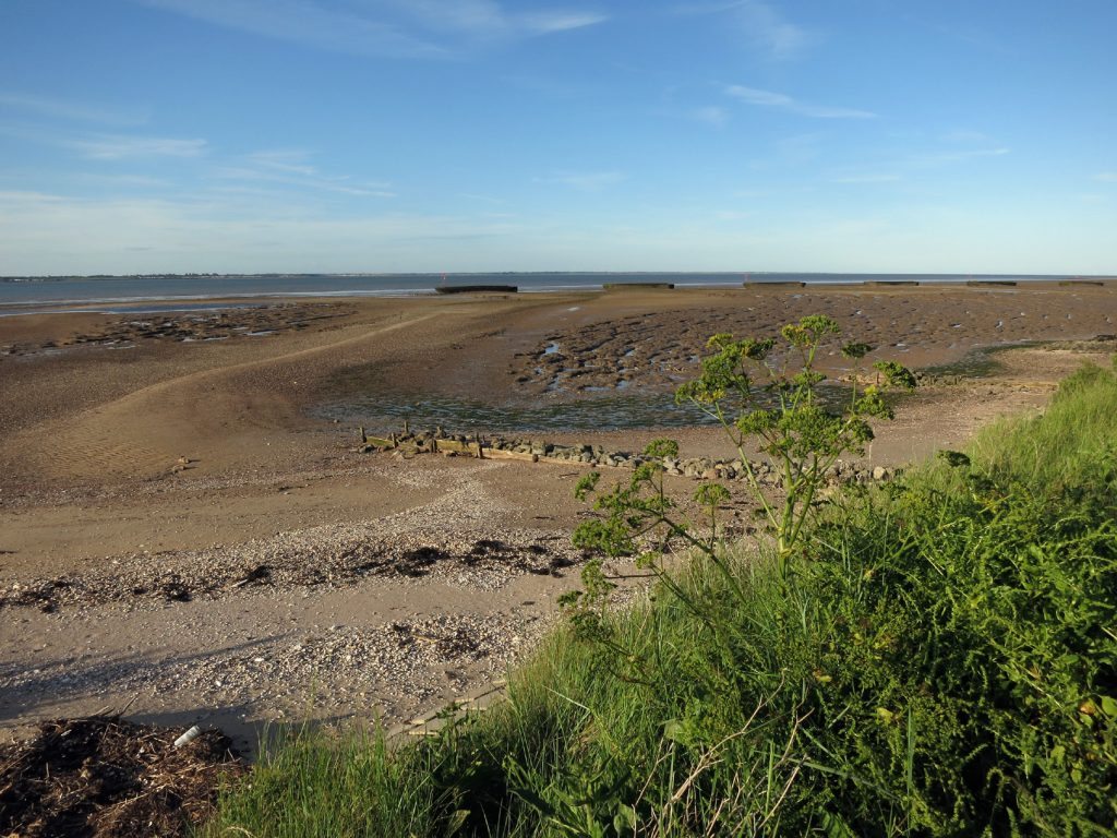 beach, mudflats, plants