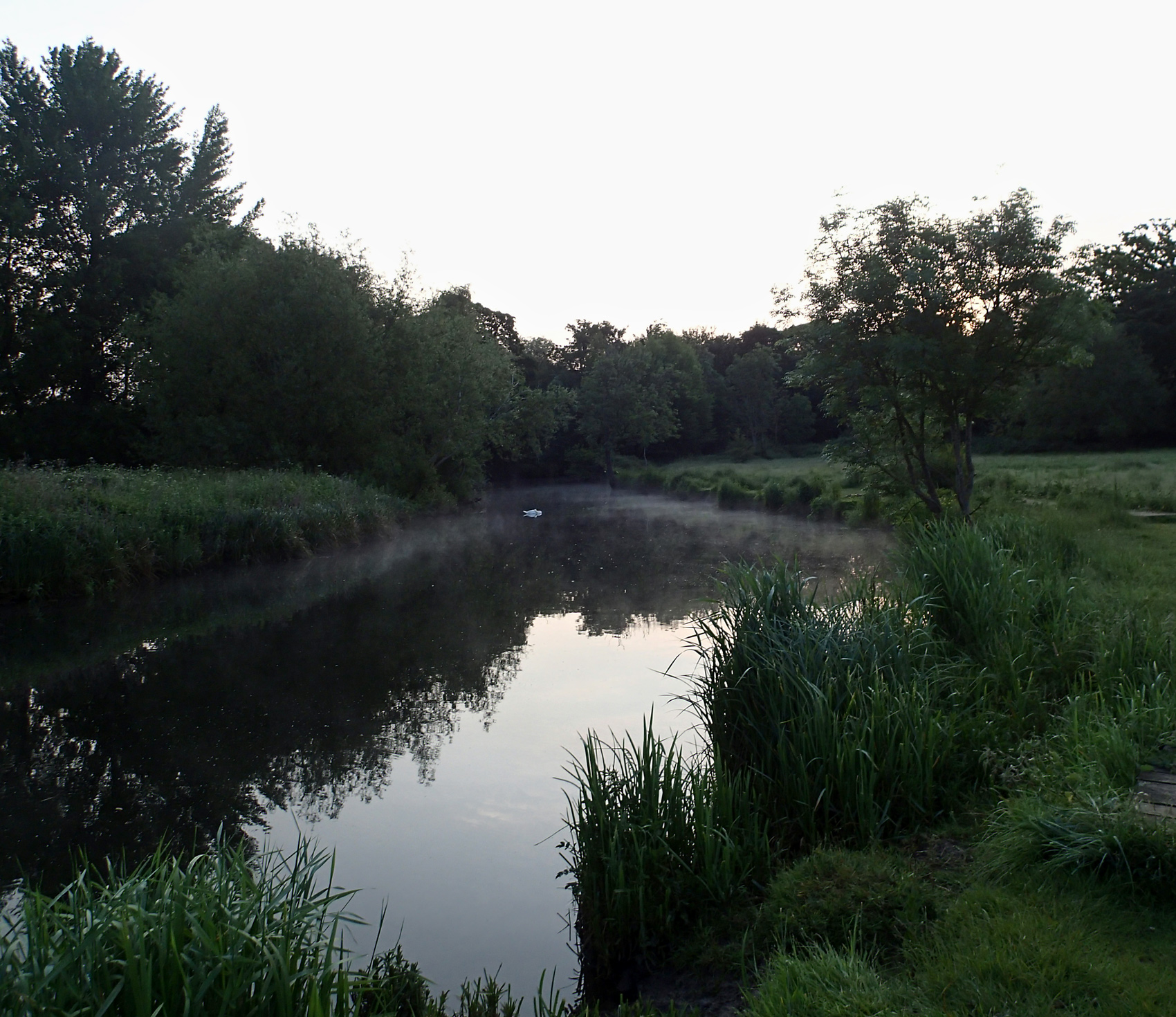 river and meadow, sun rising behind trees