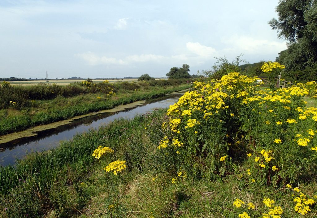 river and flowers