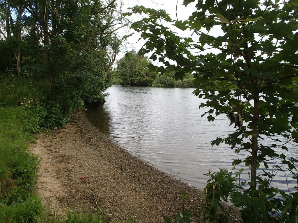 sandy beach, river and vegetation