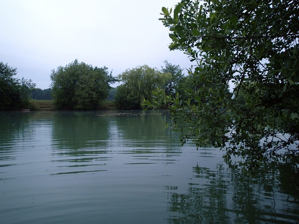 water and vegetation