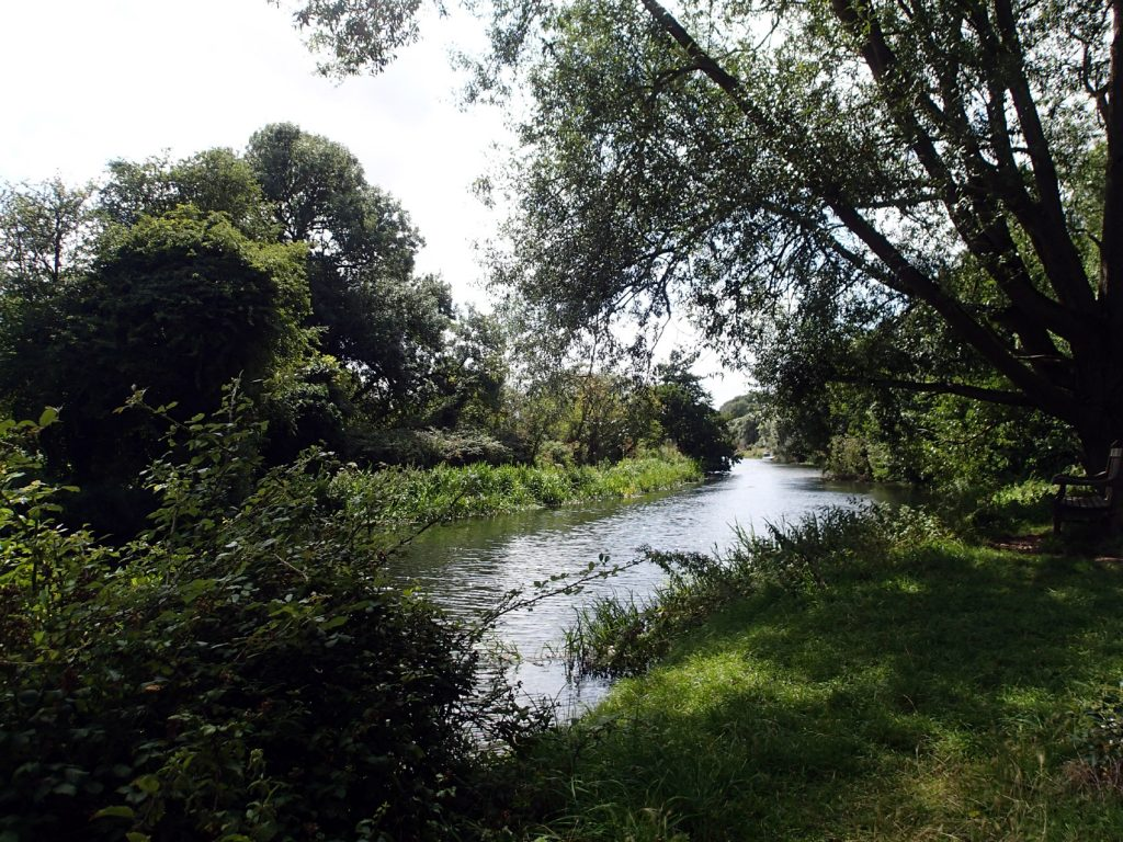 river with trees in sunshine