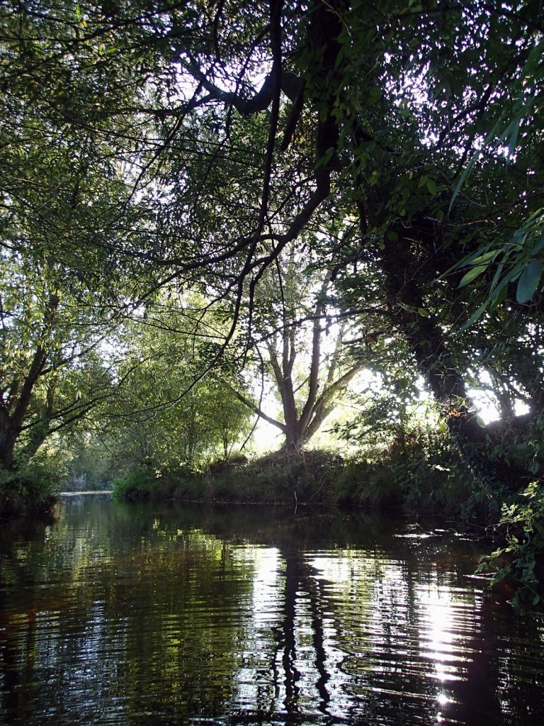 wooded river and sunlight