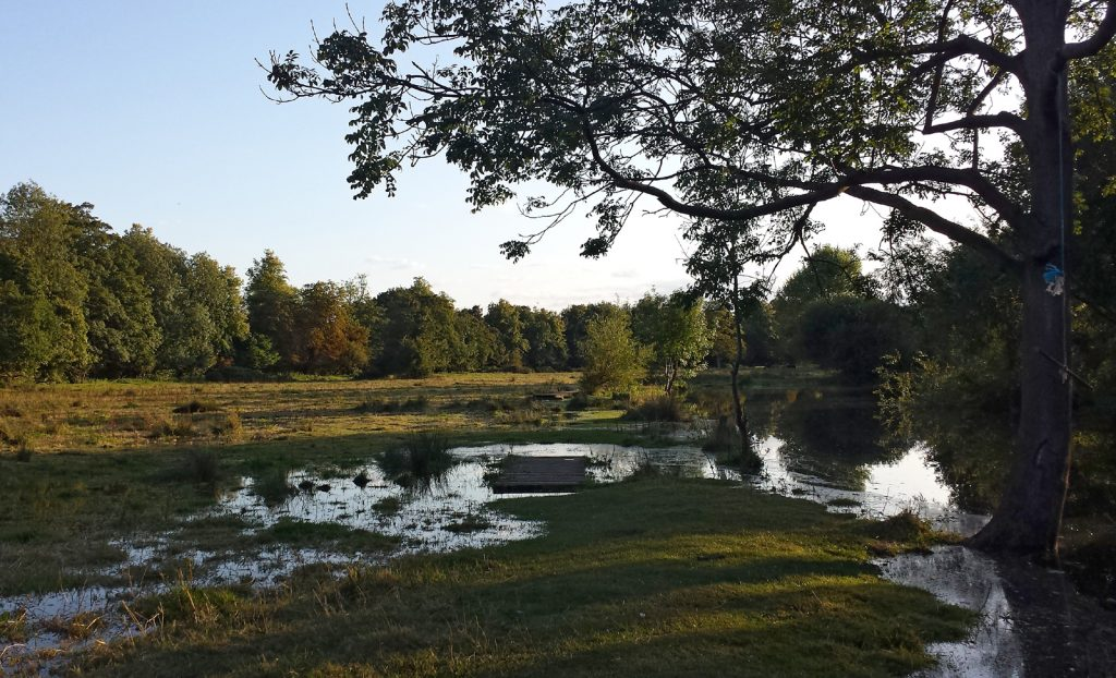 meadow with water, trees