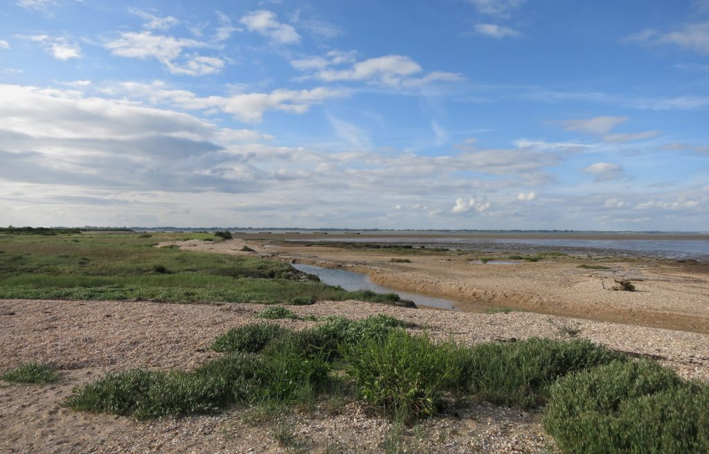shingle, plants, mud flats, distant estuary