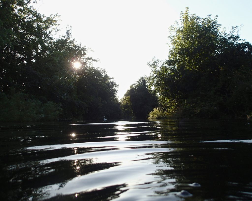 low sun through trees and water