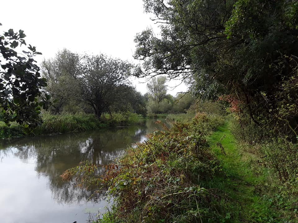 river with vegetation