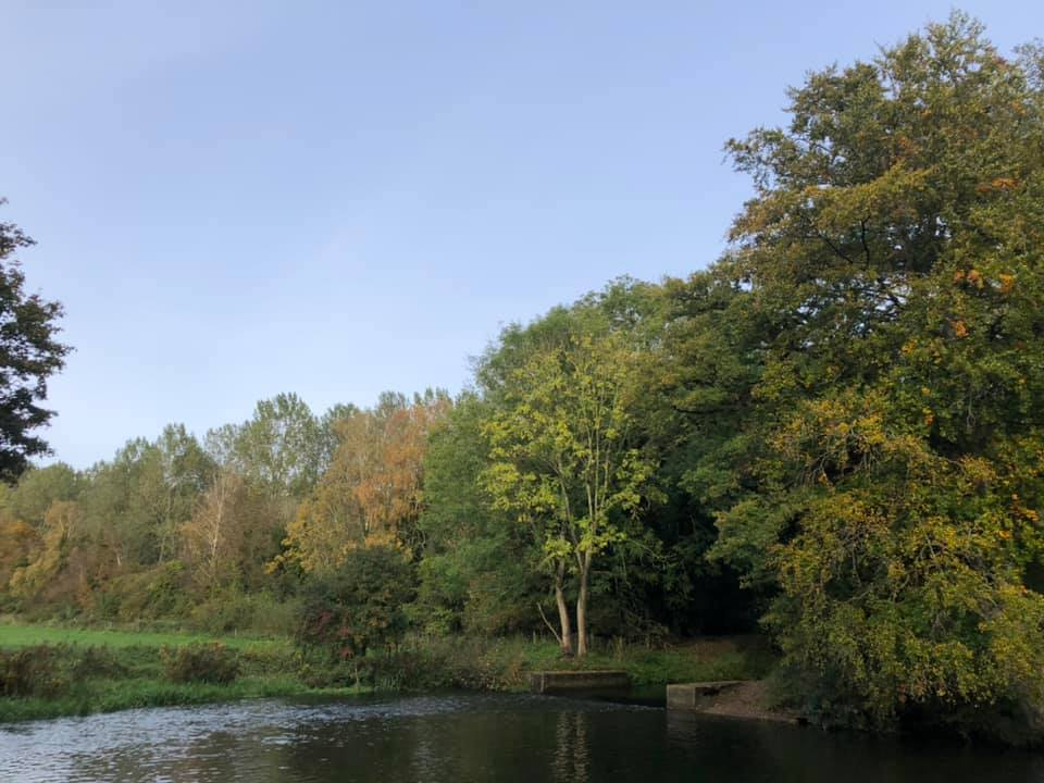water and trees starting to go autumnal Knettishall Heath