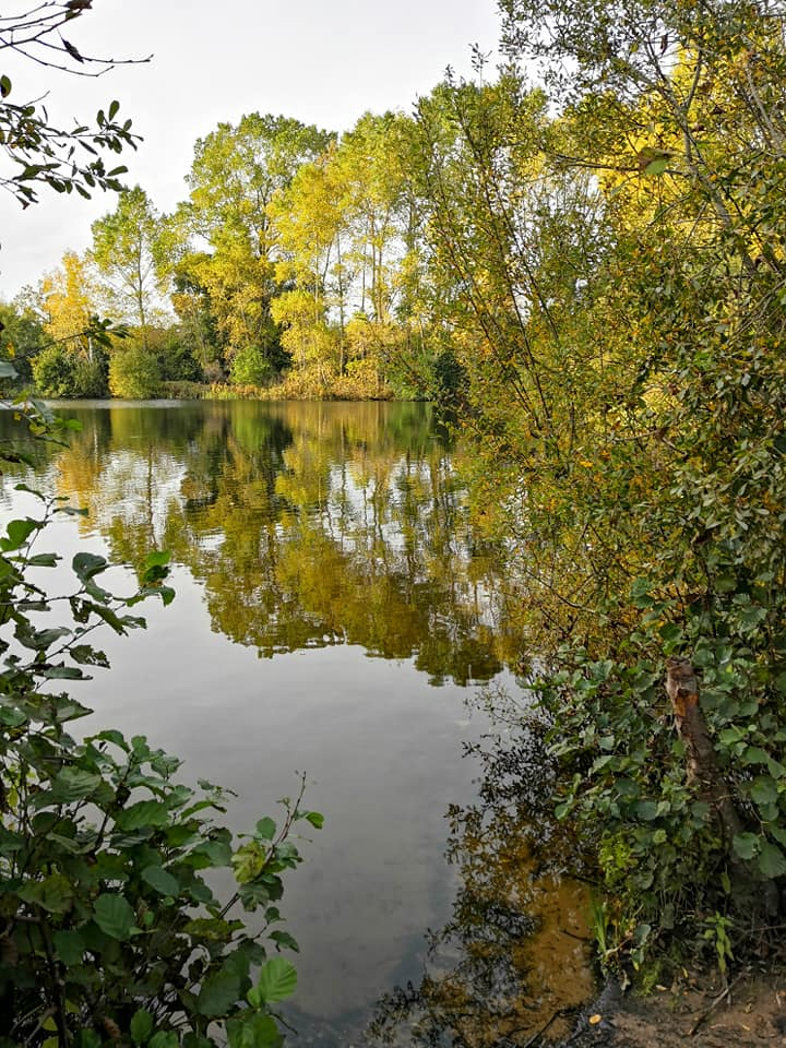 poplar trees reflected in still water and sandy water's edge