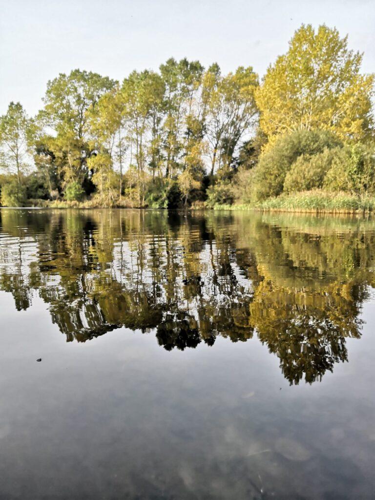 poplar trees reflected in still water, sunlit