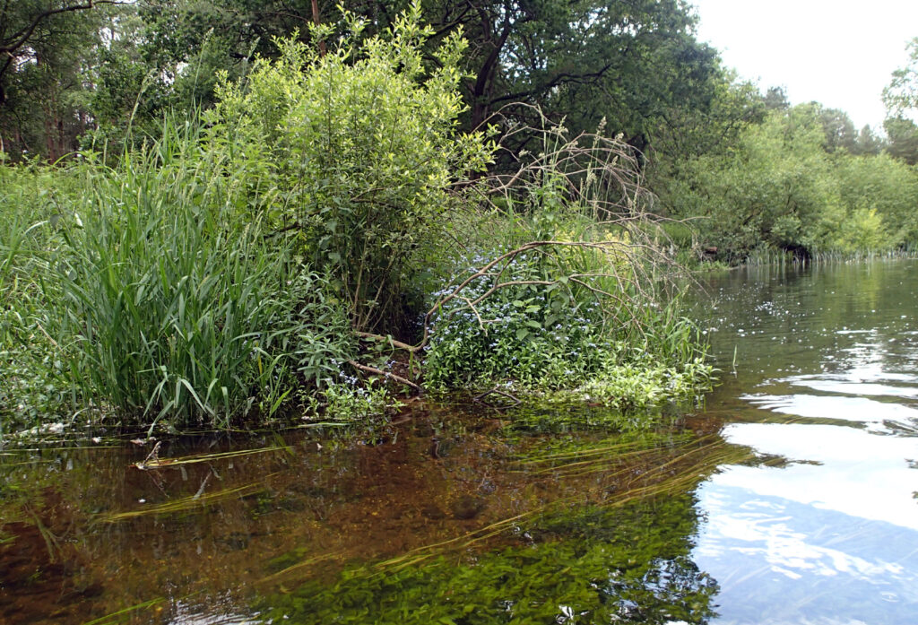 clear water and bank vegetation