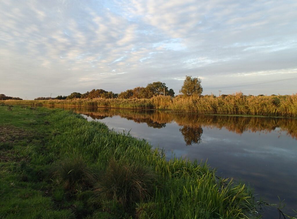clouds and reeds reflected in a still river