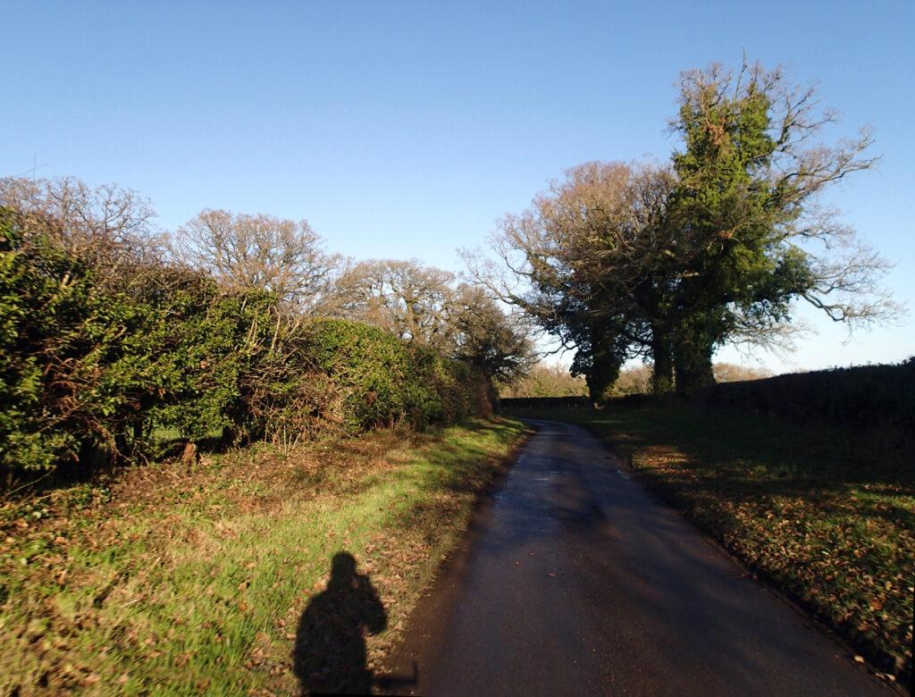 cyclists shadow oak lined lane