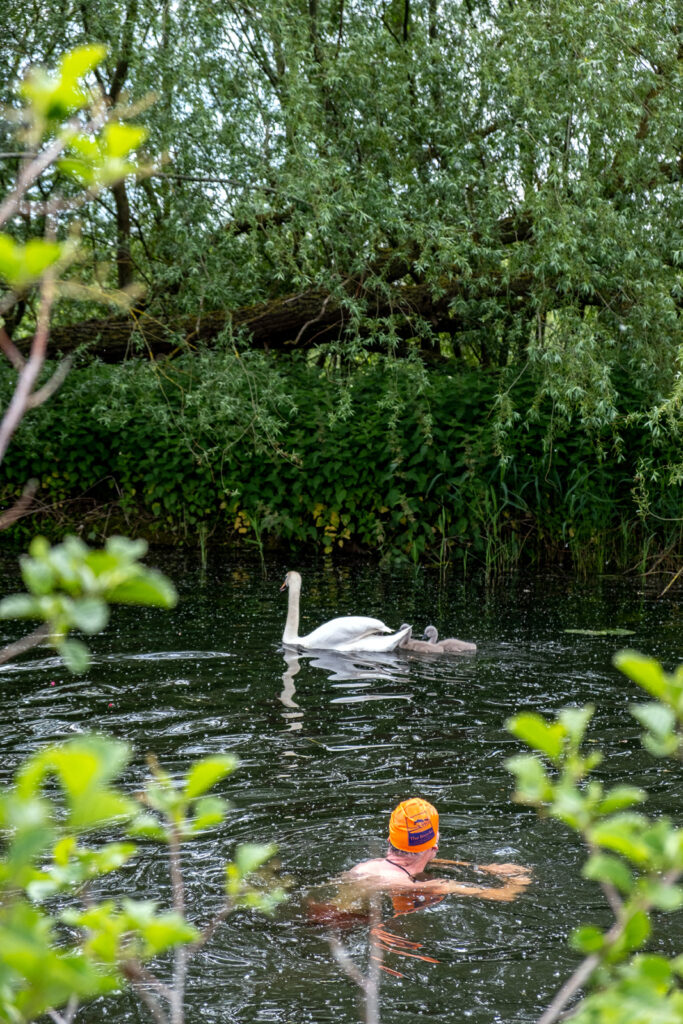 swimmer in river with swans